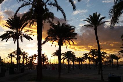 Warum Arbeiten und Leben auf Mallorca